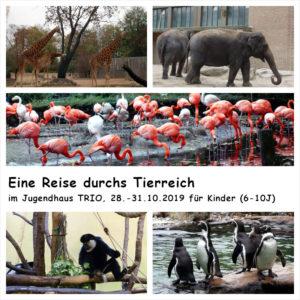 Fotocollage aus 5 Bilder mit jeweils einem Bild mit Giraffen, Elefanten, Flamingos, Pinguinen und einem Affen