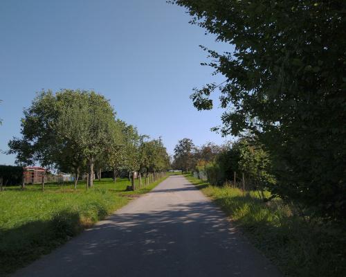 Asphaltierter Weg gerahmt von Wiesen mit Bäumen