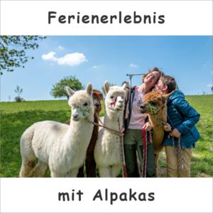 Werbeplakat für die Ferienbetreuung mit Alpakas
